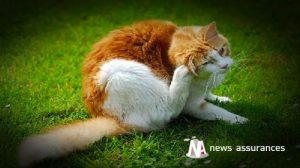 Santé animale : éviter tout contact des chiens et chats avec les chenilles processionnaires
