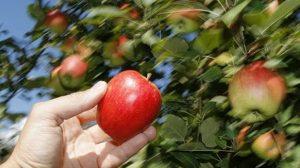 Intempéries : Les agriculteurs sinistrés pourront-ils compter sur l'aide de l'Etat?