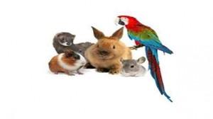 Assurance animale : Rongeurs, perroquets… un passeport «vert» pour les NAC