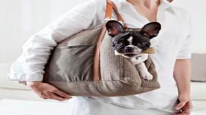 Assurance santé animale : Passer les frontières avec un animal