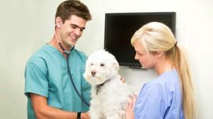 Assurance santé animale : La feuille de soins est-elle indispensable au remboursement ?