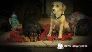 Assurance santé animale : le bilan de santé n'est pas obligatoire